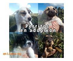 Perritos en Adopción - Imagen 1