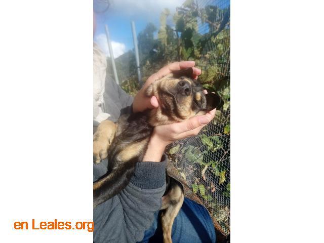 Perritos en Adopción - 2