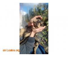 Perritos en Adopción - Imagen 2