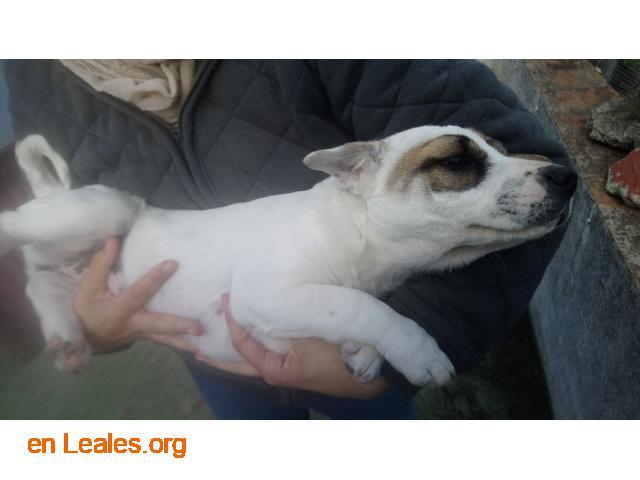 Perritos en Adopción - 3