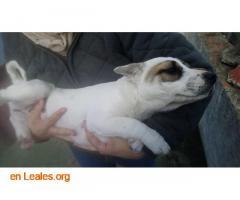 Perritos en Adopción - Imagen 3