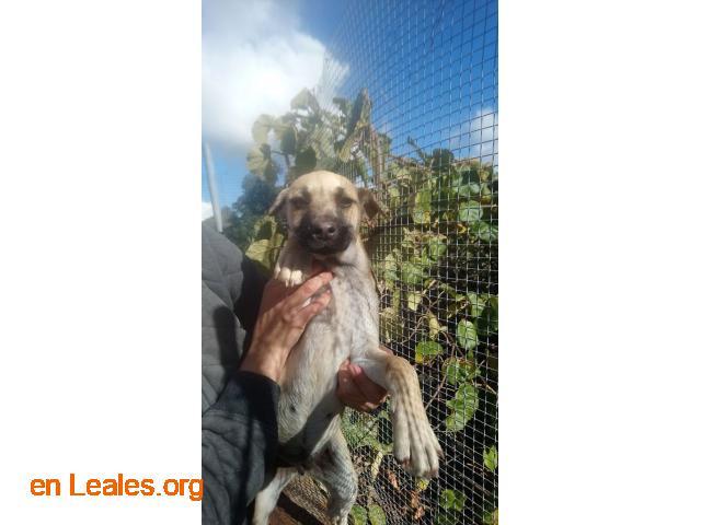 Perritos en Adopción - 4