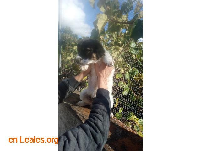 Perritos en Adopción - 5