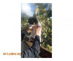 Perritos en Adopción - Imagen 5