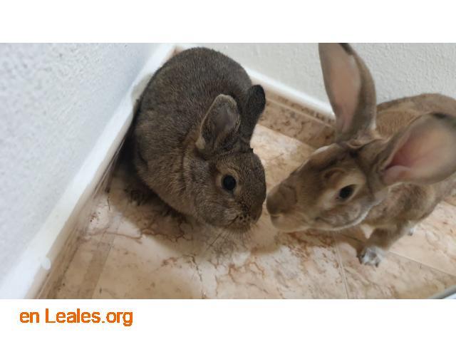 Coco y Frida en adopción - 1