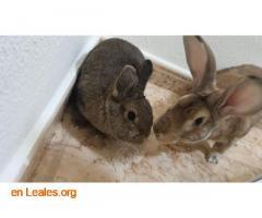Coco y Frida en adopción - Imagen 1