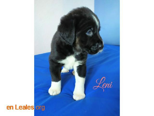 Leni - 2