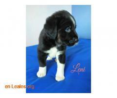 Leni - Imagen 2
