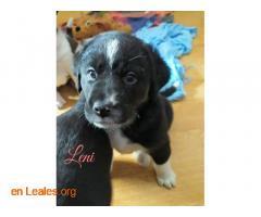 Leni - Imagen 4