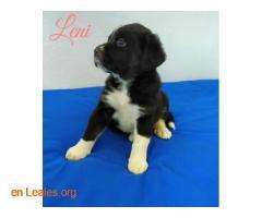 Leni - Imagen 5