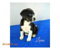 Luan - Imagen 2