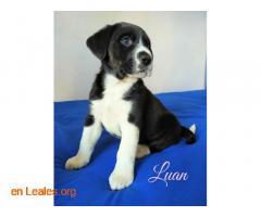 Luan - Imagen 4