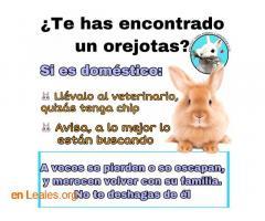 Conejo encontrado - Imagen 1