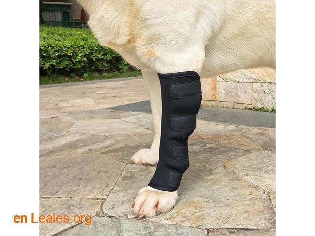 Ortopedia canina - 1