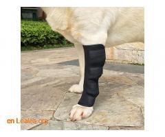 Ortopedia canina - Imagen 1