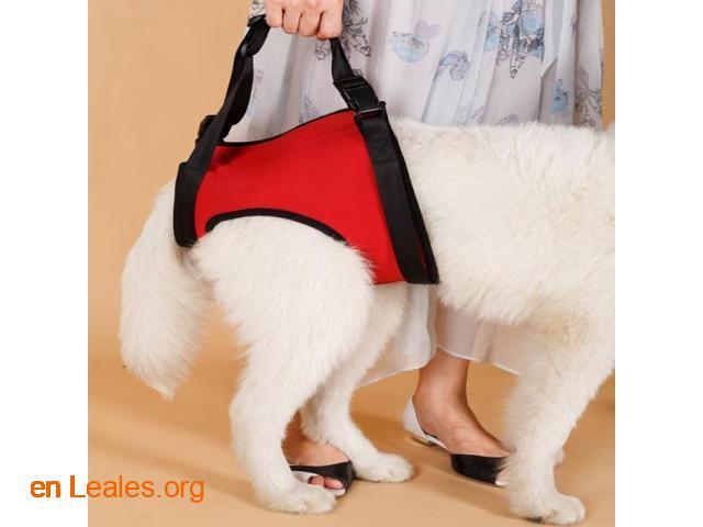 Ortopedia canina - 6