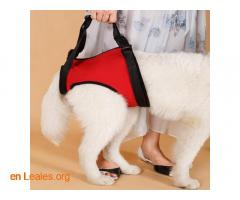 Ortopedia canina - Imagen 6