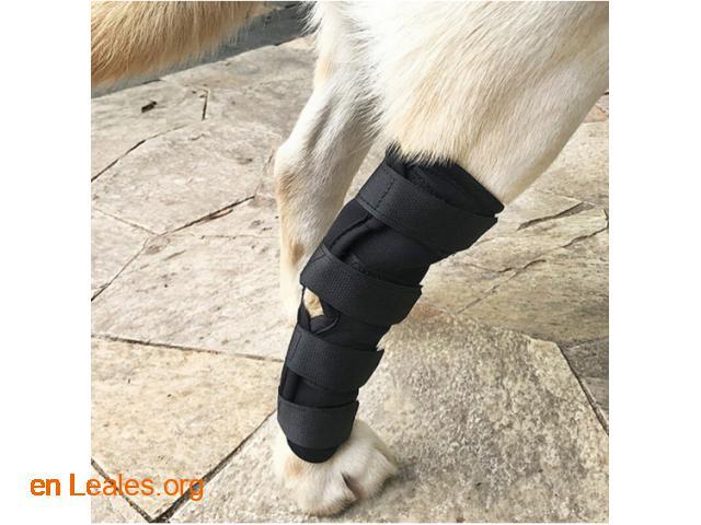 Ortopedia canina - 7