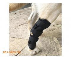 Ortopedia canina - Imagen 7