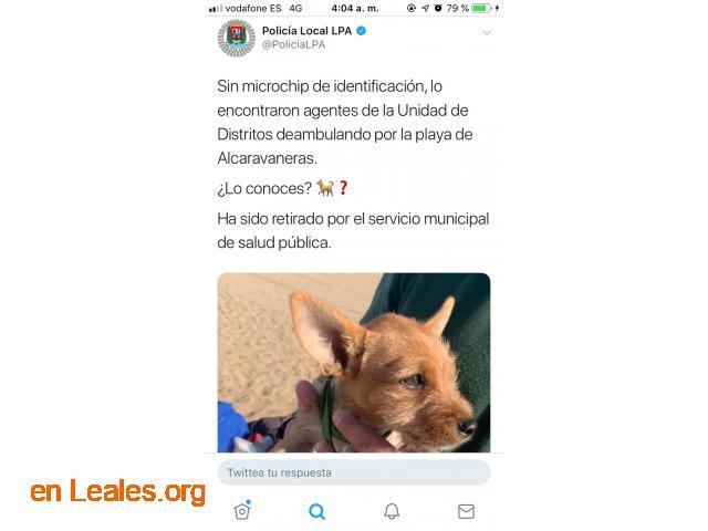 ENCONTRADO PLAYA LAS ALCARAVANERAS. - 2