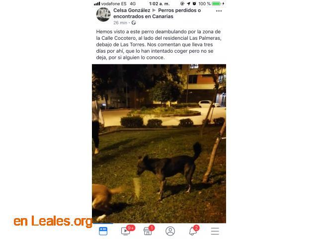 ENCONTRADO EN LAS TORRES.  LO CONOCES? - 5