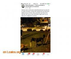 ENCONTRADO EN LAS TORRES.  LO CONOCES? - Imagen 5