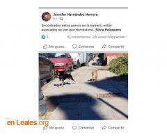 ENCONTRADOS EN LA BARRERA. LOS CONOCES?  - Imagen 4