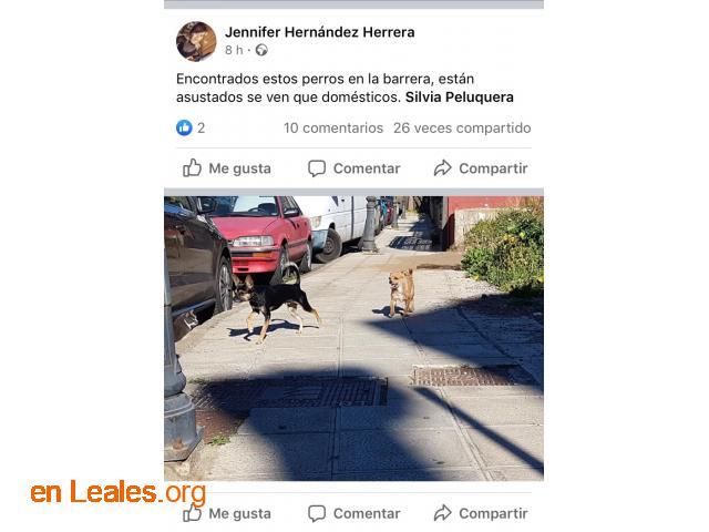 ENCONTRADOS EN LA BARRERA. LOS CONOCES? - 4