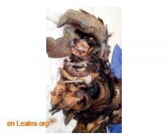 Perro atado en un patio y abandonado - Imagen 1