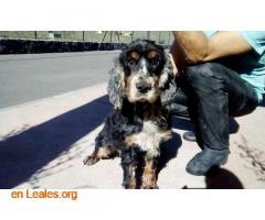 Perro atado en un patio y abandonado - Imagen 5