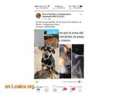 PERDIDO EN VALLESECO.   LO HAS VISTO? - Imagen 5