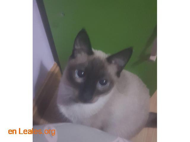 Gatito perdido se llama mayo - 1