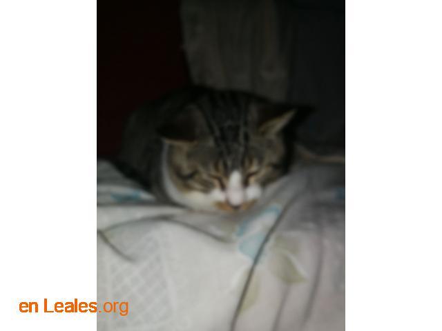 Oliver Twis último rescatado, gato feral - 1