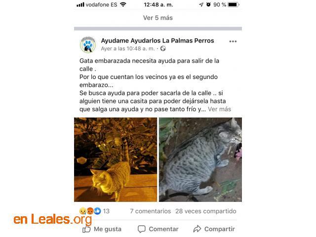 ACOGIDA URGENTE. ESTA EMBARAZADA y CALLE - 3