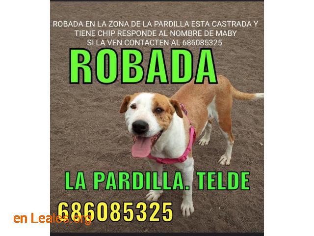LOCALIZADA Y EN CASA. TELDE, LA PARDILLA - 6