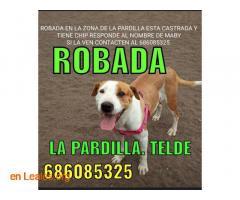 LOCALIZADA Y EN CASA. TELDE, LA PARDILLA - Imagen 6