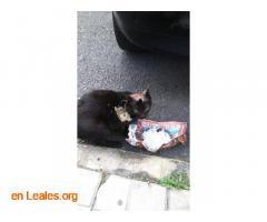 Gato capturado  - Imagen 1