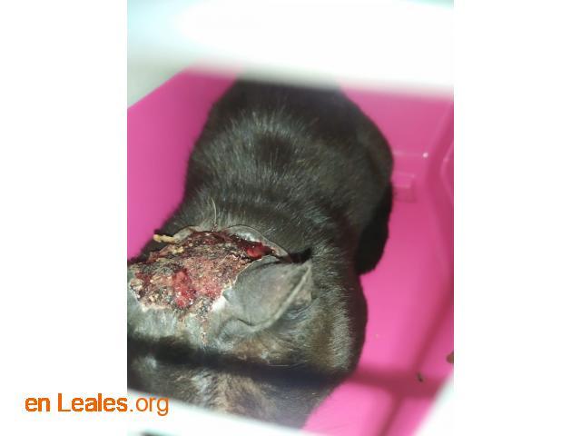 Gato capturado  - 2