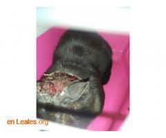 Gato capturado  - Imagen 2