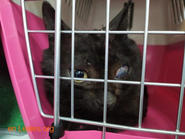 Gato capturado  - 3