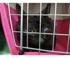 Gato capturado  - Imagen 3