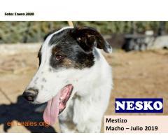 NESKO - Imagen 1