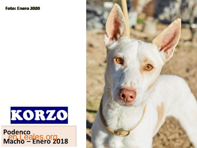 KORZO - 1
