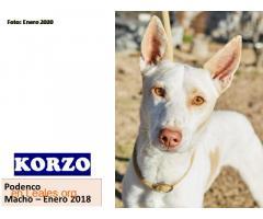 KORZO - Imagen 1