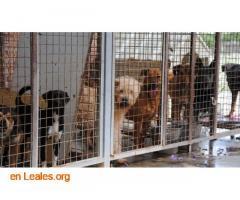 Muertes de animales al dia  - Imagen 1