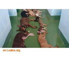 Muertes de animales al dia  - Imagen 2