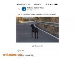 ENCONTRADO EN SAN MATEO.  LO CONOCES?   - Imagen 2