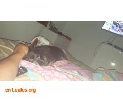 Perro perdido - Imagen 4