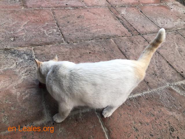 Gato encontrado en La Garita - 2