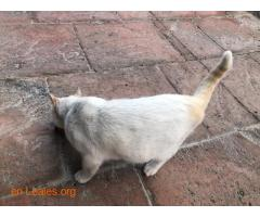 Gato encontrado en La Garita - Imagen 2